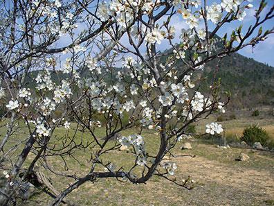 Argentis au printemps
